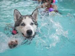 La piscine : bien plus qu'un simple élément de décoration