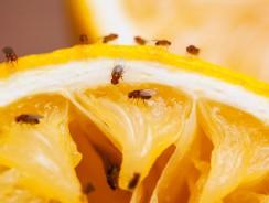 Comment trouver un nid de moucherons ?