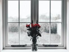 Comment décorer votre intérieur avec des fleurs d'hiver ?