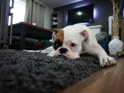 Dans quelle pièce peut-on placer un tapis de sol ?